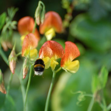 Plant hunting and access and benefit sharing legislation – a research project.